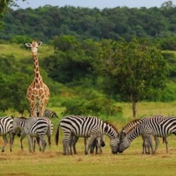 Calauit Safari Tour in Coron, Busuanga