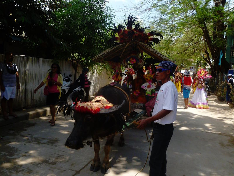 The Carabao is specially dressed for a traditional celebration in El Nido, Palawan