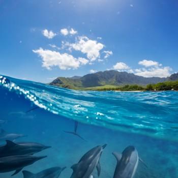 Dolphin Watching in Puerto Princesa, Palawan