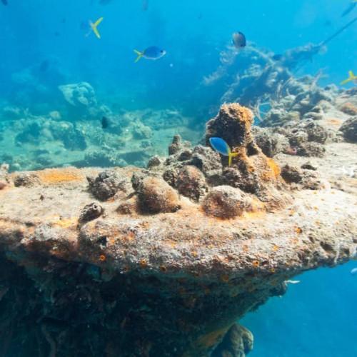 East Tangat Gunboat – Reefs & Wrecks Adventure Tour in Coron, Palawan