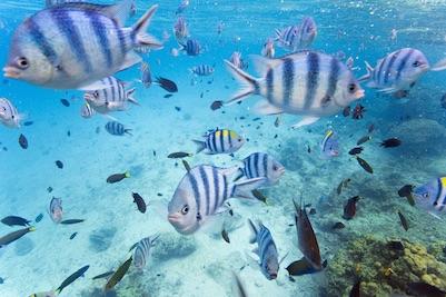 Tropical Fishes in El Nido, Palawan