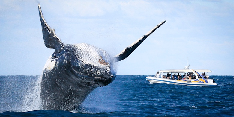 Following the Guidelines of Whale-Watching in El Nido and the Philippines